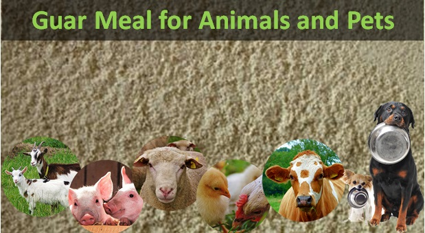 Guar Meal for Animals and Pets